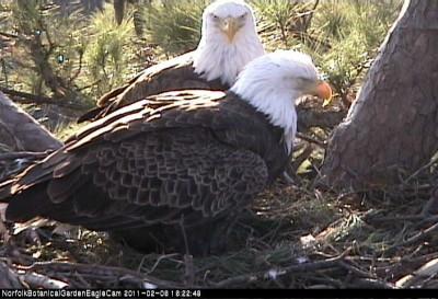 Eagle live